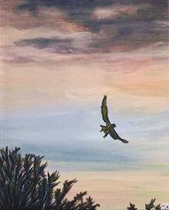 """Bird of prey over Sibster, Caithness"""