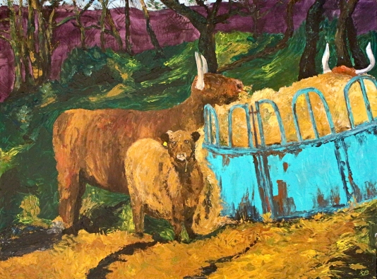 Highland cattle at feed, Balnain, Glenurquhart